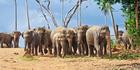 Elephants roam in Udawalawe National Park. Photo / Getty Images