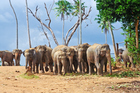 Elephants roam in Udawalawe National Park. Photo / Getty Images