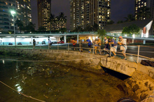 Visitors and Oahu residents watch the water level in the Ala Wai Harbor waiting for the arrival of a tsunami in Honolulu. Photo / AP