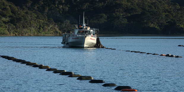 Mussel farms offshore in the Coromandel Peninsula. Photo / Alan Gibson
