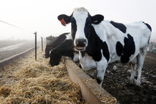 Fonterra will develop two farms located 120km east of Beijing, on an 80-hectare site. Photo / NZH