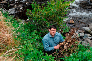 Fish and Game Otago operations manager Ian Hadland with the green waste dumped on the banks of the Water of Leith near Malvern St yesterday. Photo / Linda Robertson.