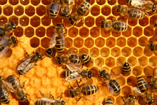 Prices for top-quality manuka honey have risen to a massive $400-plus a kilogram. Photo / Thinkstock