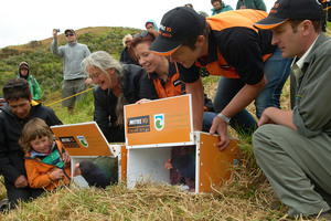 One of New Zealand's rarest native birds, the takahe, is released on Motutapu Island. Photo / DoC
