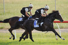 My Quest For Peace leads stablemate Mount Athos in a workout at Werribee. The Pair will be hard to beat in the Melbourne Cup. Photo / Getty Images