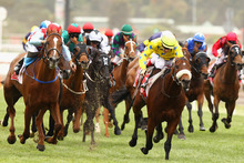 Dunaden (yellow colours) will have his Australian swansong in the Melbourne Cup tomorrow. Picture / Getty Images