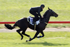 With no New Zealand horses in the Melbourne Cup there will be plenty of interest in Kiwi jockey James Mc Donald's mount Fiorente. Photo / Supplied