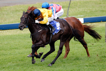 Silent Achiever (front) will be all the rage in the Matriarch Stakes at Flemington today. Photo / Dean Purcell