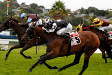 Shez Sinsational should help fatten up your punting funds for the Melbourne Cup by winning the Lindauer Stakes at Ellerslie today. Trainer Allan Sharrock is pleased with her fitness. Photo / Natalie Slade