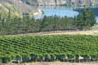 Vineyard in Bannockburn, Central Otago. Photo / Supplied