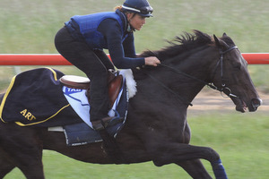 Americain has 3.5kg more than he carried in the 2010 Cup. Picture / Getty Images
