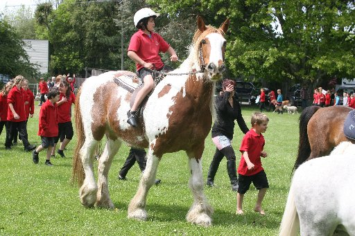 Greytown School Pet Day.The Grand Parade. Ricco Rankin, 11, on Charlie the Clydesdale.