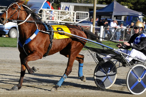 Murcielargo appeals as an each-way prospect in the minor trot early on the card at Addington today.Picture / Otago Daily Times