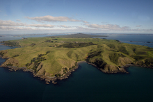 There is a possibility Motutapu will be leased to be farmed as part of Auckland's Tamaki Collective settlement. Photo / Dean Purcell