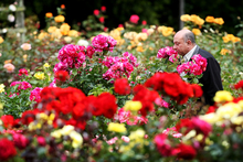 November is a great month to stop and smell the roses. Photo / NZ Herald