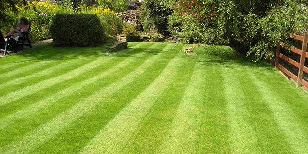 If the grass has got away on you over the spring, it is important not to try to scalp it back too much on the first cut. Photo / Supplied