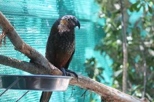 Photo / Wellington zoo