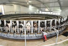 Morningstar researchers have suggested investors steer clear of new Fonterra units at least until they start trading. Photo / Mark Mitchell