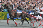 Terror To Love was a warm favourite to repeat his success of last year in today's NZ Trotting Cup at Addington.