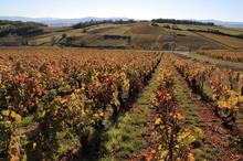 Pinot noir and chardonnay make up the vast majority of Burgundy's wine. Photo / Thinkstock