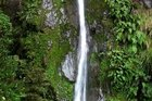 McGregor Falls, in Tararua Forest Park. Photo / File photo