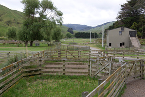 The Grays farm in Porirua where animals were kept for the Hobbit films. Photo / Mark Mitchell