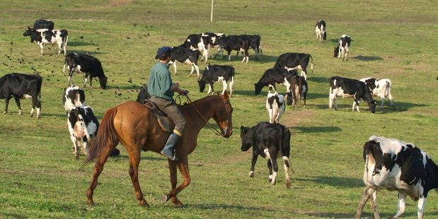 "New Zealand Farming Systems Uruguay's annual financial statements in 2009 included the words ""fudge this"". Photo / Supplied"