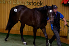 The New Zealand Bloodstock Ready to Run sale. Photo / Sarah Ivey