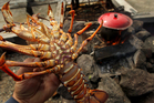 The squeeze on discretionary spending in China is affecting crayfish export prices.  Photo / Alan Gibson