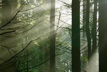 Imagine walking the tree tops of the Bavarian Forest. Photo / Thinkstock