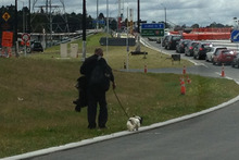 A man walks over the road in West Auckland with a dog slung over his shoulder attached to a harness. Photo / Supplied