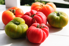 Plant different varieties of tomato to get a longer harvest. Photo / The New Zealand Listener