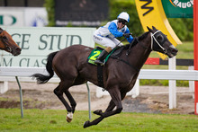 Trainer Steve McKee is happy with the progress of stable star Mufhasa for the Captain Cook Stakes. Photo / NZPA