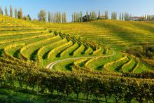 Vineyard in Slovenia. Photo / Thinkstock