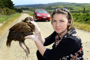 Alli Cunningham holds a weka near the spot where she hit it while driving in Brighton, Dunedin. Photo / Peter McIntosh