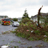 A large tree lies over the road after a tornado hit the area of Hobsonville in West Auckland this morning. Photo / Sarah Ivey