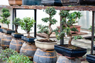 The ancient art of bonsai can be both practical and relaxing. Photo / Thinkstock