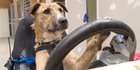 View: Old dogs learn new driving tricks