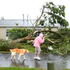 Devastation on Wallingford Way, Hobsonville, yesterday after a tornado tore through West Auckland. Photo / NZ Herald