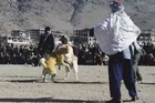 Dog fights in Afghanistan were banned under the Taliban regime as un-Islamic but they are proving popular once again. Held in vacant car parks on a weekly basis, spectators place bets on the outcome of the matches which end as soon as one dog shows absolute domination.
