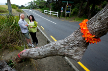 Former Piha residents Warwick and Kath Buckton look at the hotly debated roadside pohutukawa branch which has been partly sawn at its base. Photo / Dean Purcell