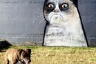 "Kate has spotted a magic bit of graffiti art that has appeared in the local dog park in Three Kings, Auckland. ""It's a portrait of the internet meme 'Grumpy Cat' looking not too happy about being around all these dogs,"" she writes. Grumpy Cat is a nickname given to an angry looking snowshoe cat who became famous after its pictures were posted online. Photo / Supplied"