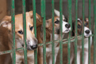 The testing of psychoactive substances on dogs is illegal in other countries. Photo / Supplied