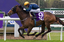 Viadana had her trainer Lance Noble skipping the light fandango after her win at Ellerslie on Saturday. Photo / Greg Bowker