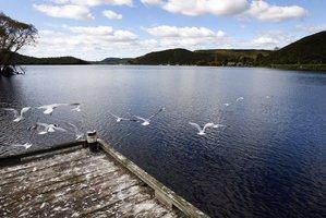 Lake Rotoiti. Photo / Sarah Ivey