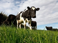 Fonterra are looking to expand its milk processing capacity in the lower North Island. Photo / Brett Phibbs