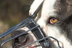 There has been a spate of dog attacks on children. Photo / Thinkstock