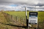 For Sale signs placed alongside one of the Crafar farms near Reporoa. jFile Photo / Christine Cornege