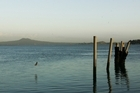The Tamaki Estuary seen from the Half Moon Bay Marina. Photo / The Aucklander