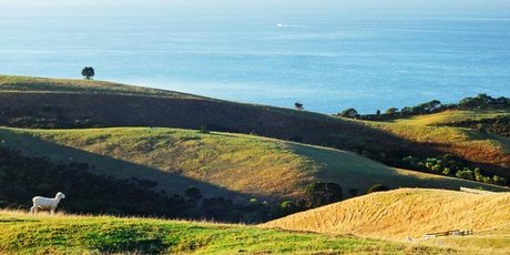 Shakespear Regional Park. Photo / Supplied